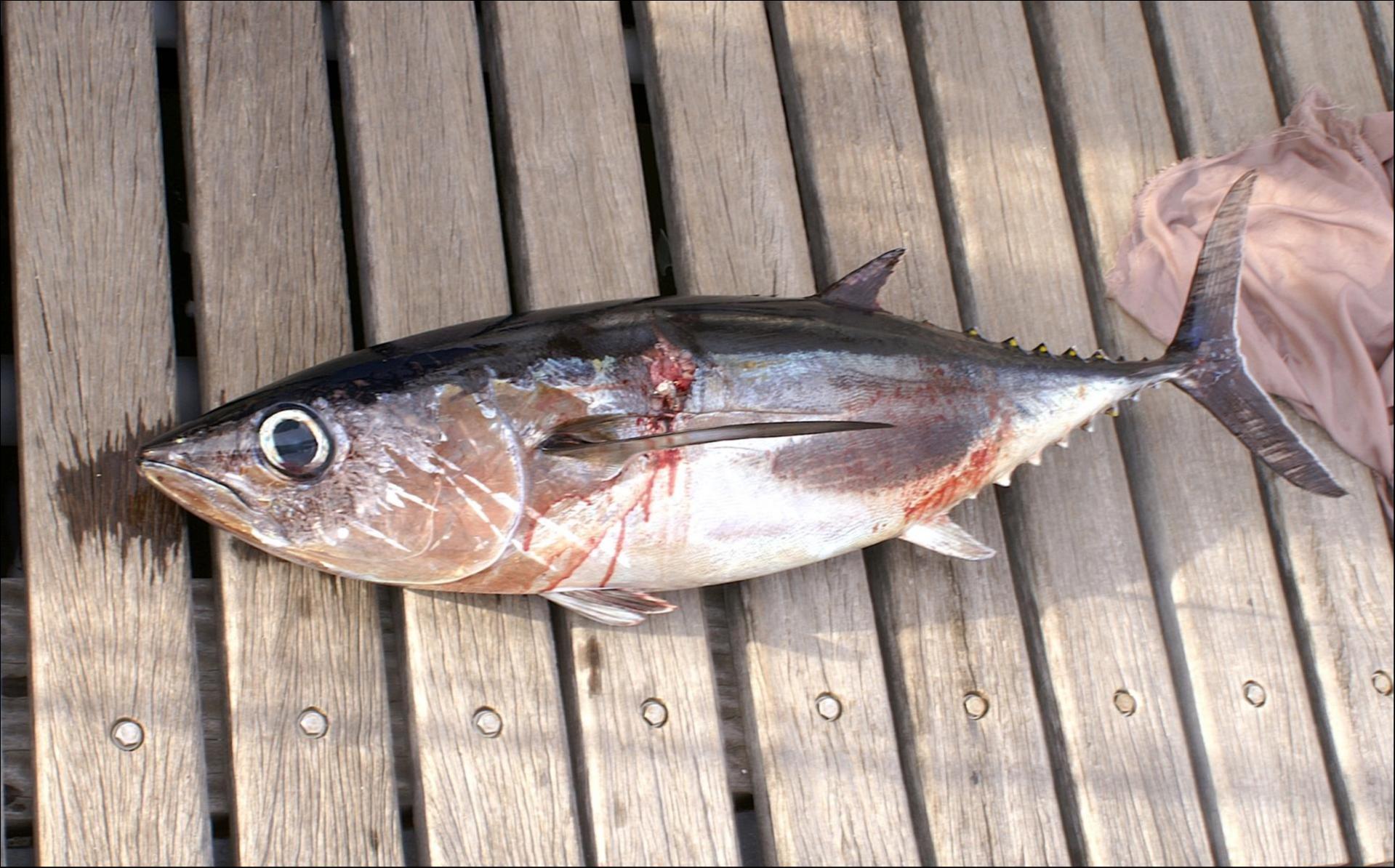 LEONIE, le germont du 1er jour de pêche