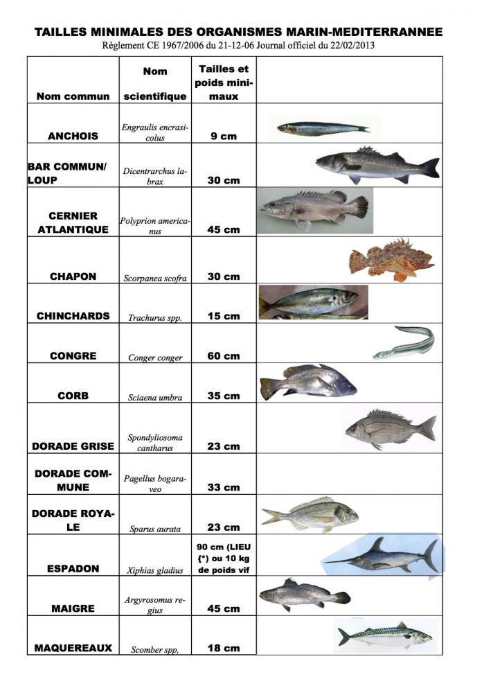 Maille poissons2 pub 1